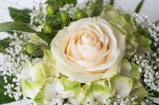rose-1335068_640
