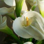 flower-bouquet-1346516_640