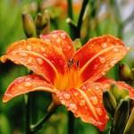 flower-1146824_640